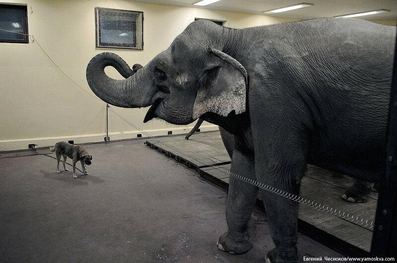 10. Браво. Слоны Т.Корниловой. 20.02.16.04..jpg