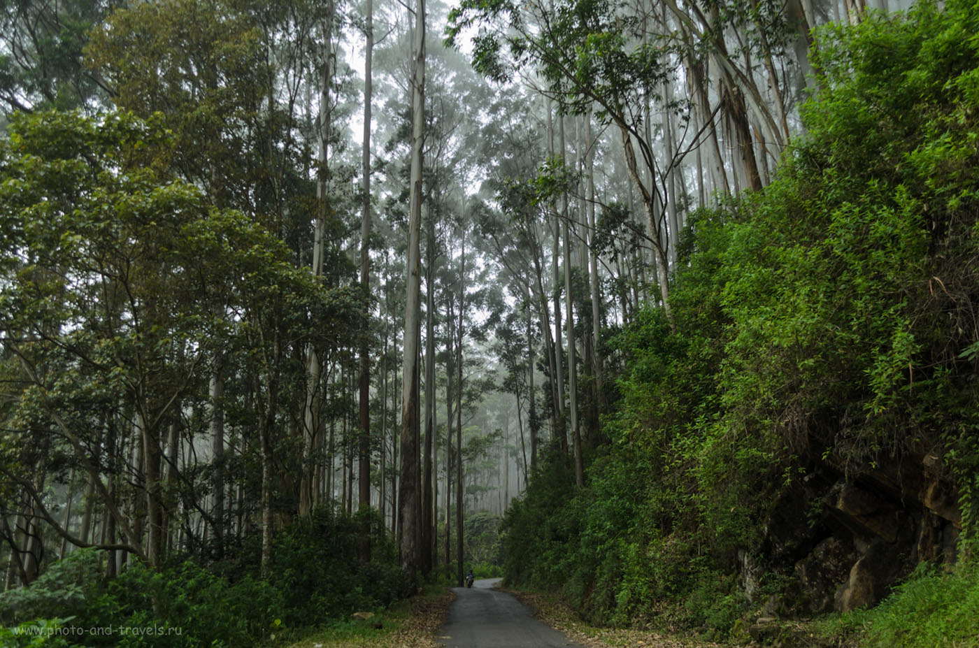 Фото 14. Отзывы туристов о самостоятельной экскурсии в национальный парк Хортон Плейнс (Horton Plains National Park). Отдых на Шри-Ланке самостоятельно. Поездка на машине в деревню Наллатанния для восхождения на Пик Адама.