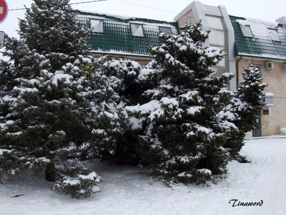 зима-5.jpg