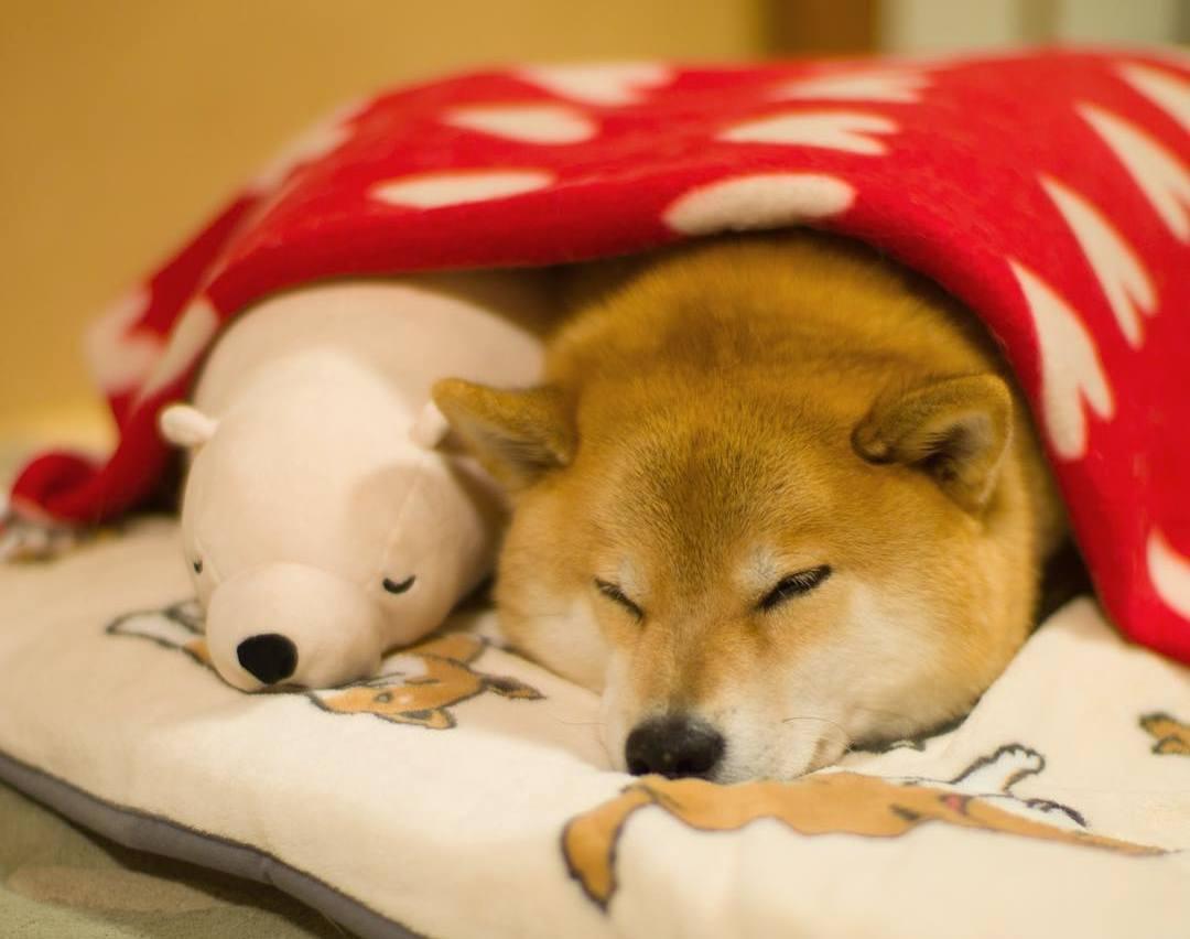 Самый улыбчивый пес и его любимая игрушка