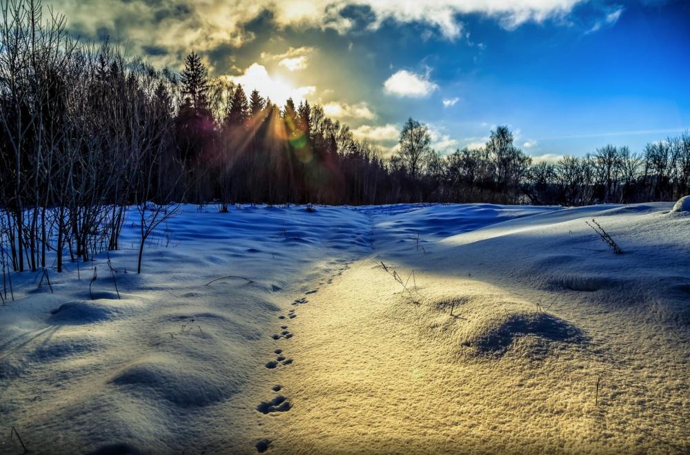 ©Aleksei Grigorev Иоживленные магистрали