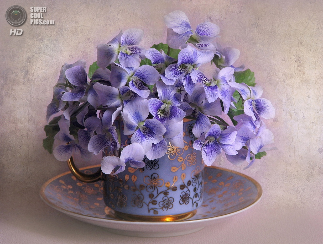 Вальс цветов (25 фото)