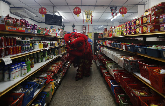 Dancers perform a lion dance inside a local shop during celebrations of the Chinese Lunar New Year o