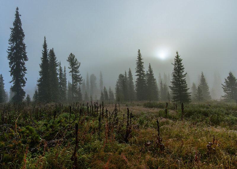 Туман