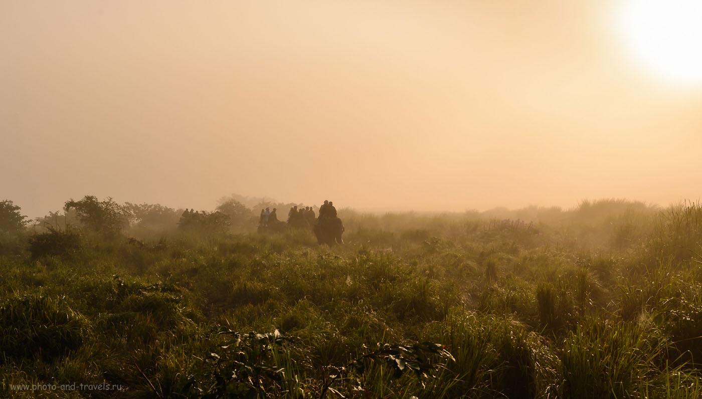 Фотография 6. Поиски носорогов среди высокой травы заповедника Казиранга. Отчеты туристов из России о поездке в Индию самостоятельно. 1/500, -0.33, 8.0, 200, 40. Nikon 24-70/2.8