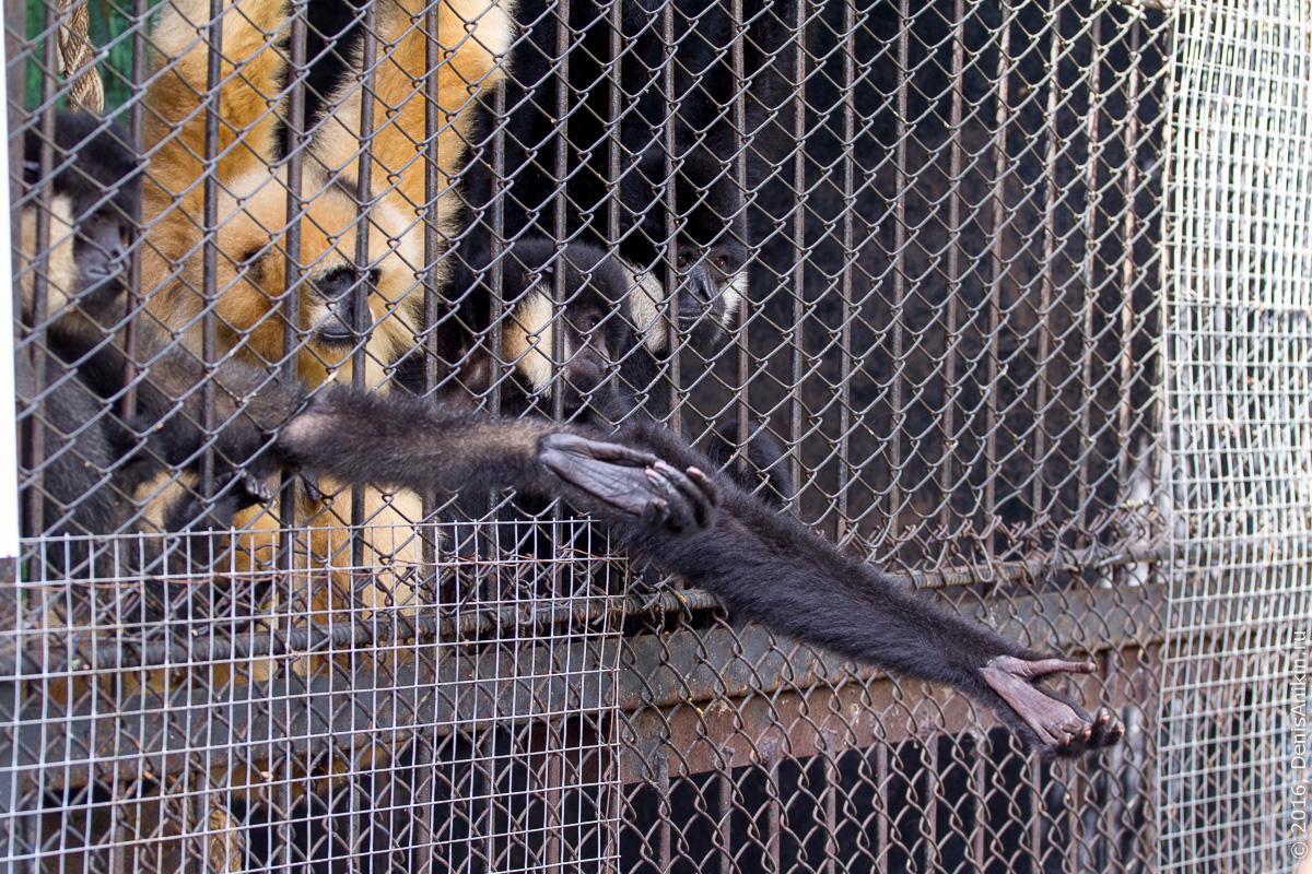 Пензенский зоопарк. Животные 19