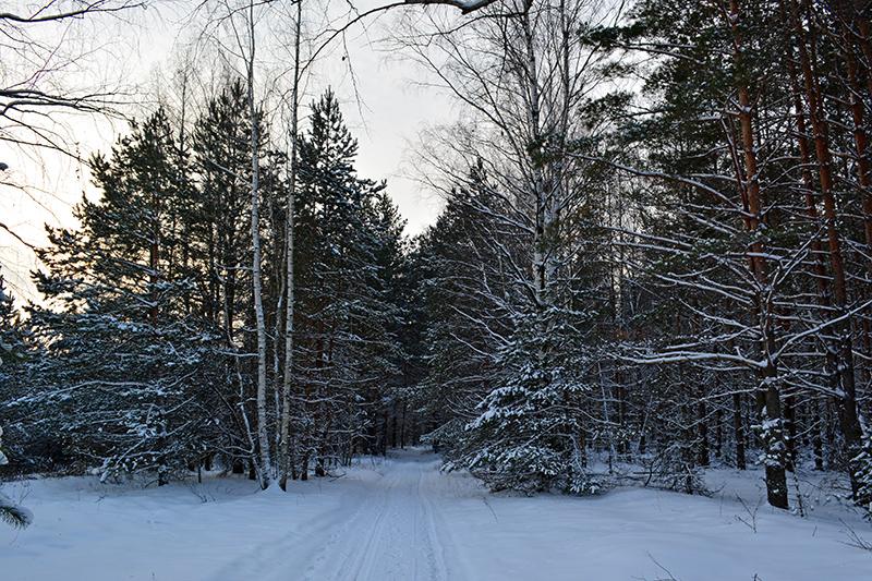 зимний лес 7