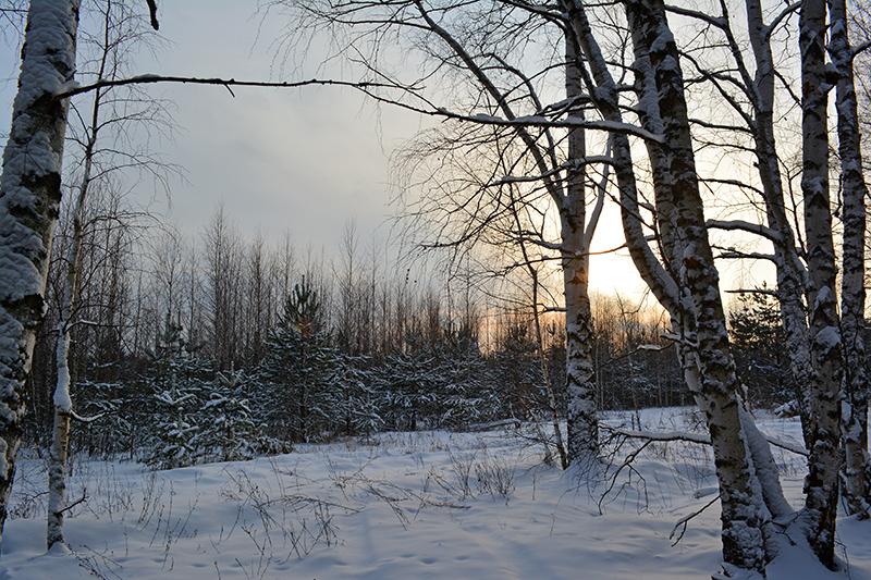 зимний лес 15