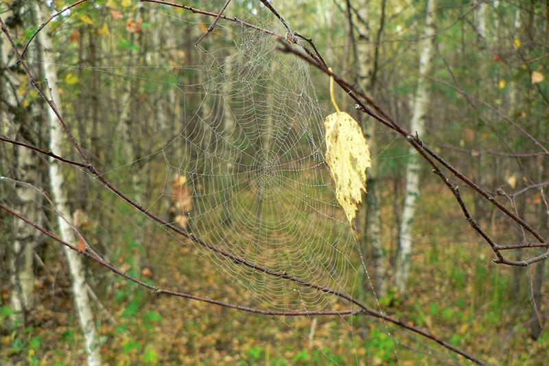 осенняя паутина