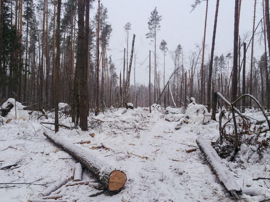 санитарная очистка леса