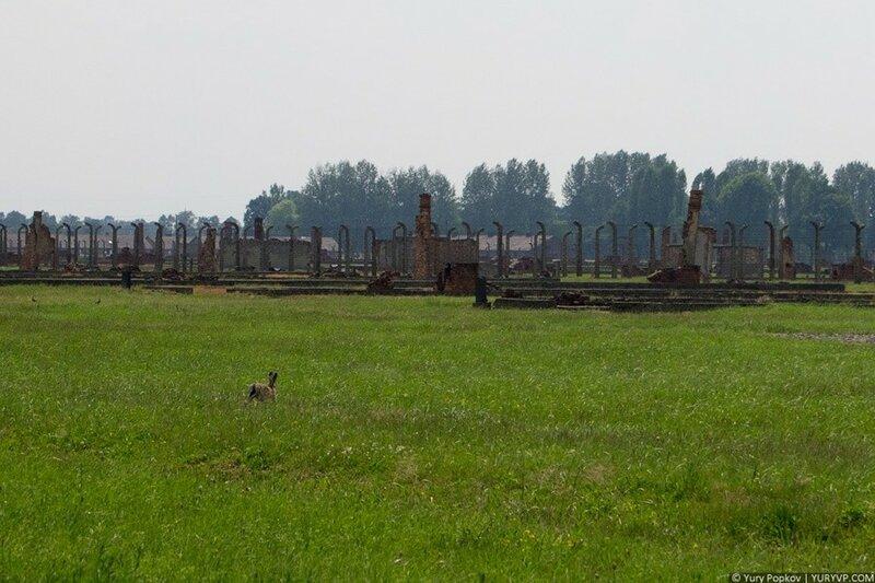 Фотоэкскурсия. Концлагерь Освенцим / Аушвиц 0 105d20 19da0c54 XL
