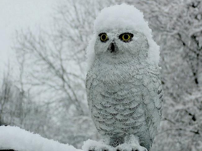 Снег ейклицу.