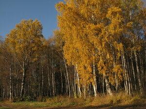 14-21 октября - СПб и Всеволожский р-он Ленобласти