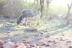заповедник Panna National Park & Tiger Reserve