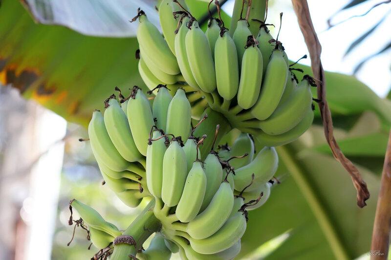 А вот и бананы