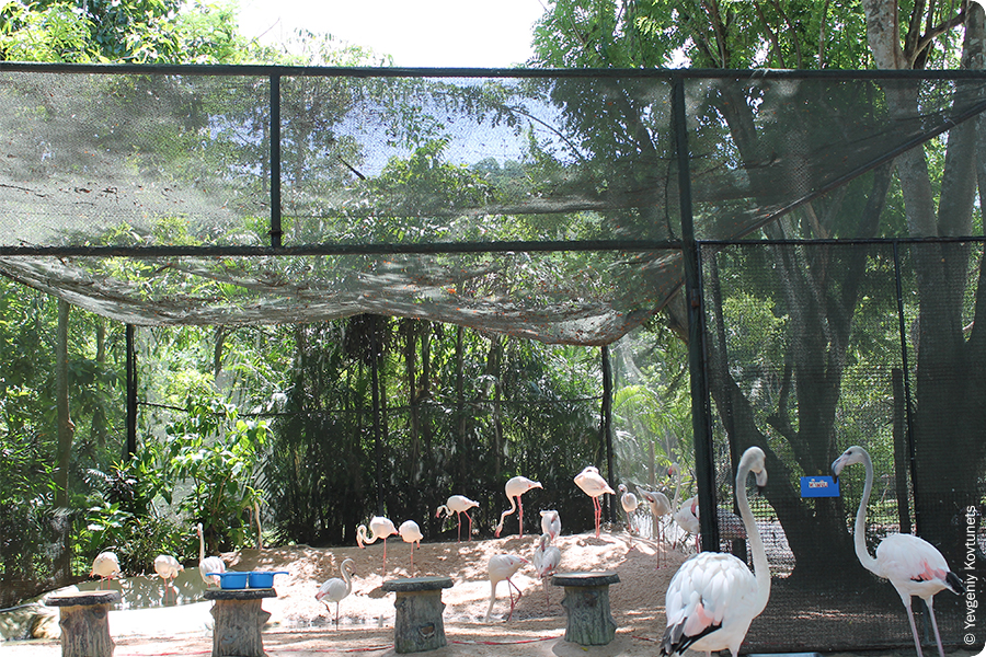 Павильон розовых фламинго в открытом зоопарке Кхао-Кхео