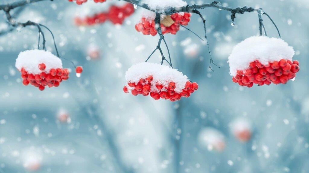 Обои на рабочий стол Новый год 2020, зима, снег, рябина