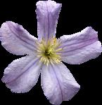RR_SpringFling_Element (90).png
