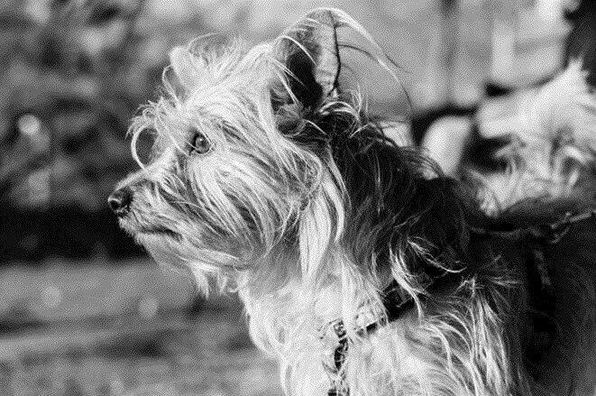 Лучшие друзья человека. 30 фотографий собак