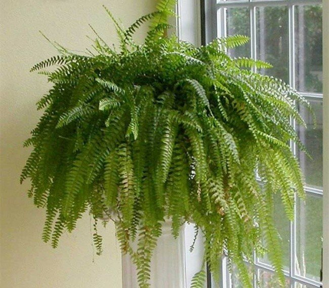 Комнатные растения, помогающие уснуть. Домашние растения, растущие в темноте