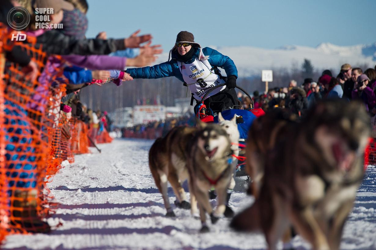 США. Уиллоу, Аляска. 2 марта. Зрители приветствуют упряжку Ивонны Дабакк. (Marc Lester/Anchorage Dai