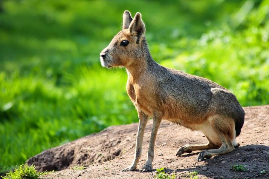 10уникальных животных, которых фотошопила сама природа