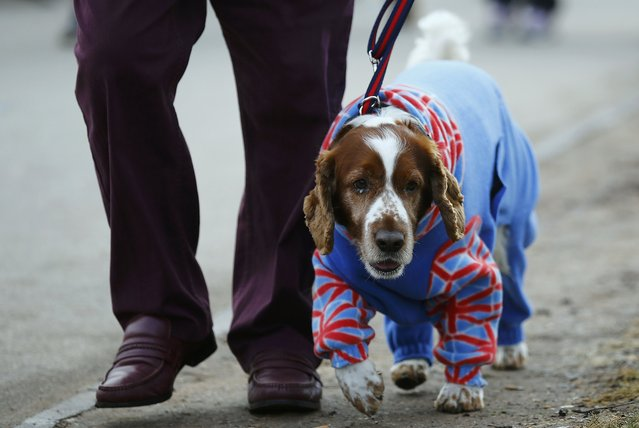 A dog arrives dressed in a onesie for the second day of the Crufts Dog Show in Birmingham, Britain M
