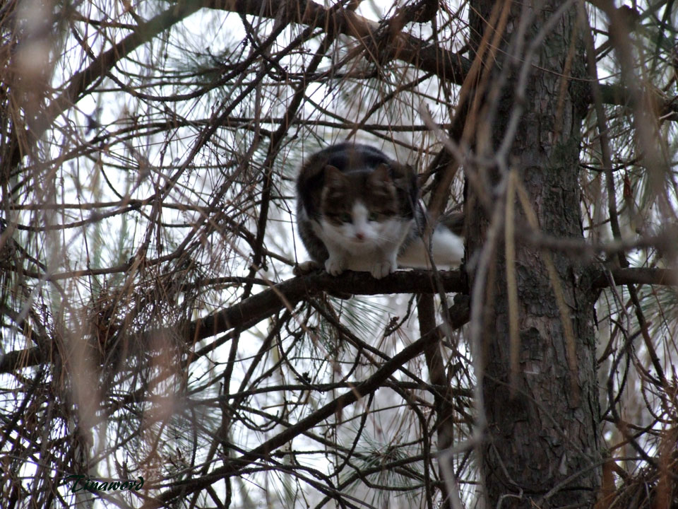 коты-07.jpg