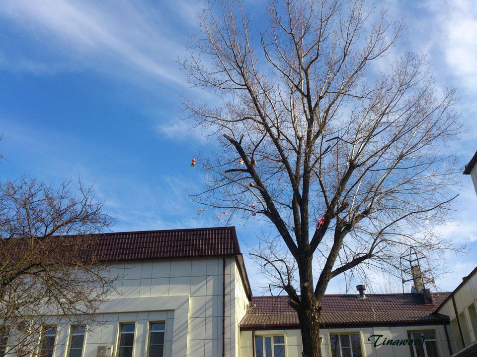 дерево-0.jpg