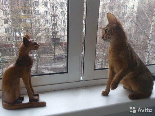 https://img-fotki.yandex.ru/get/66745/50951434.24/0_14611b_b1bb6b02_L.jpg