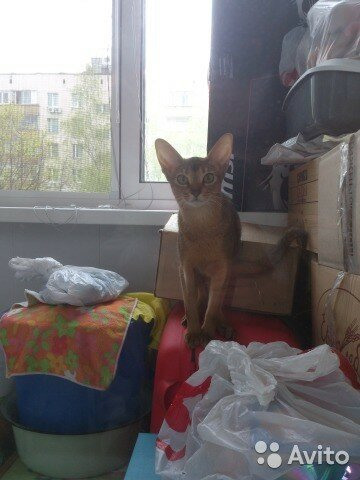 https://img-fotki.yandex.ru/get/66745/50951434.24/0_14611e_82db8803_L.jpg