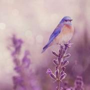 Птица на лаванде