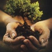 Деревце руках
