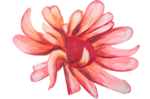 feli_weh_painted flower.png