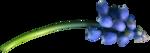 RR_SpringFling_Element (74).png