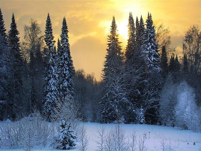 Зимняя тайга (фото)