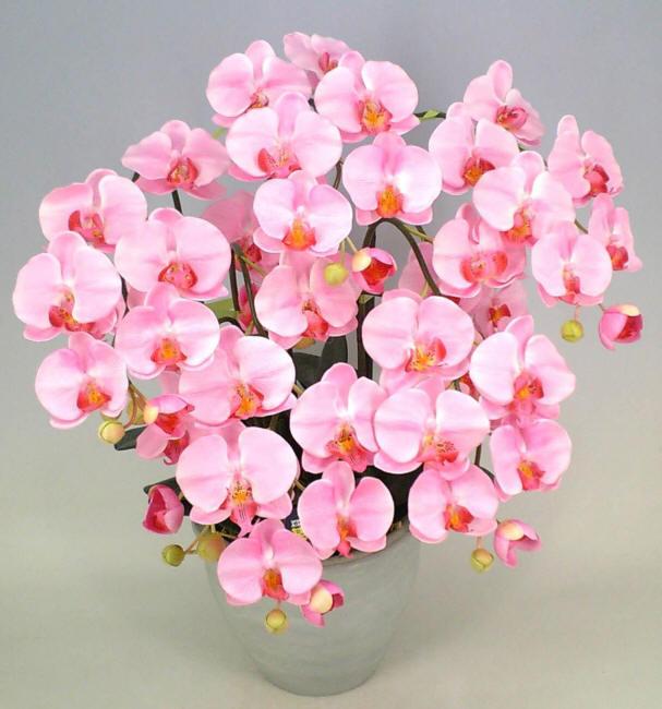 орхідеї в горщику