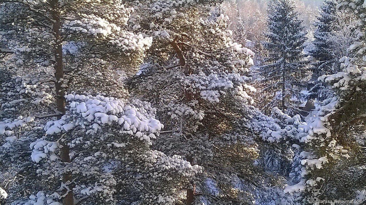 Морозно, -25. 20 января 2016 г.
