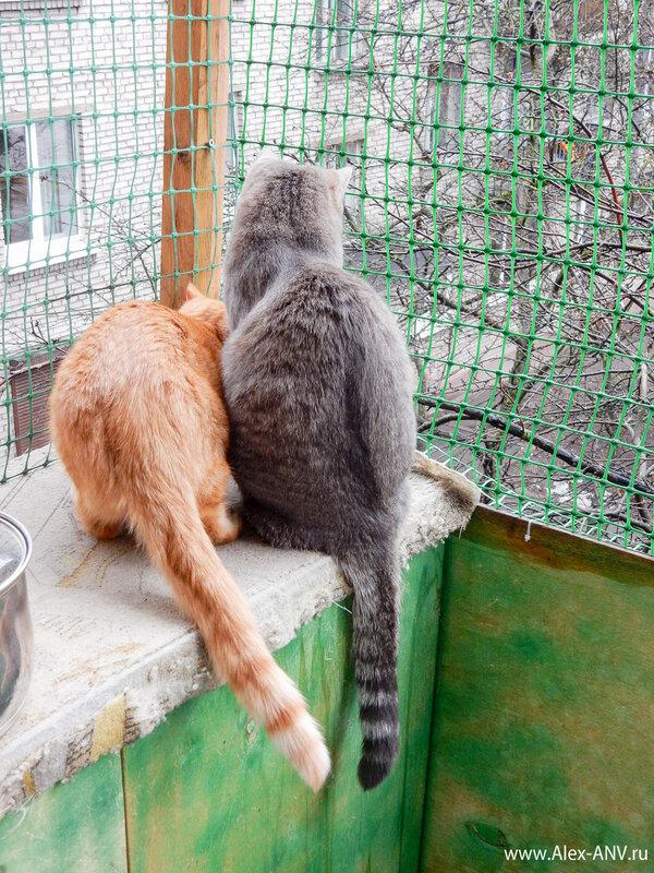 Глядь, а коты на что-то уставились, мелкий аж жопой крутит азартно.