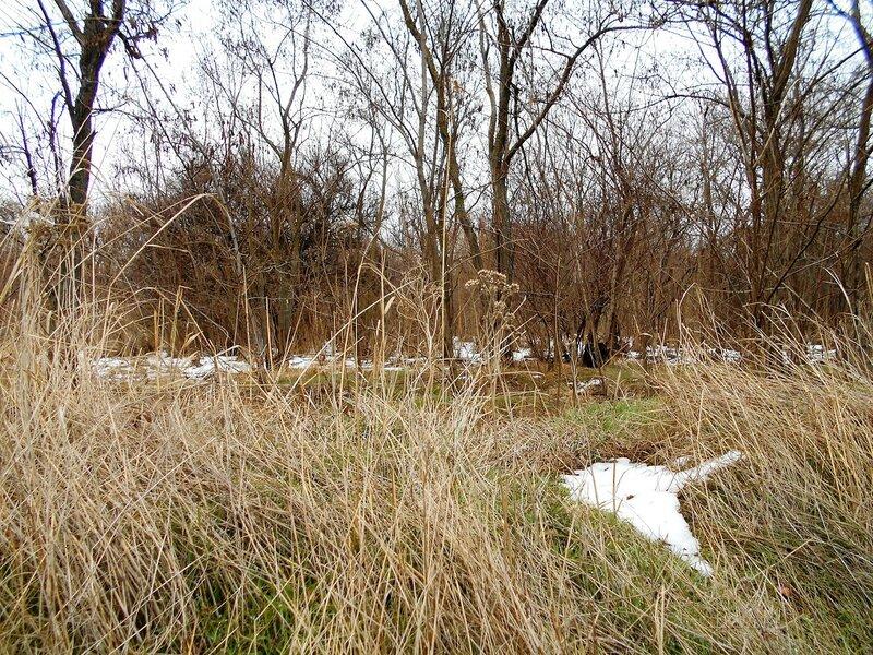 В лесу зимой ... DSCN3301.JPG