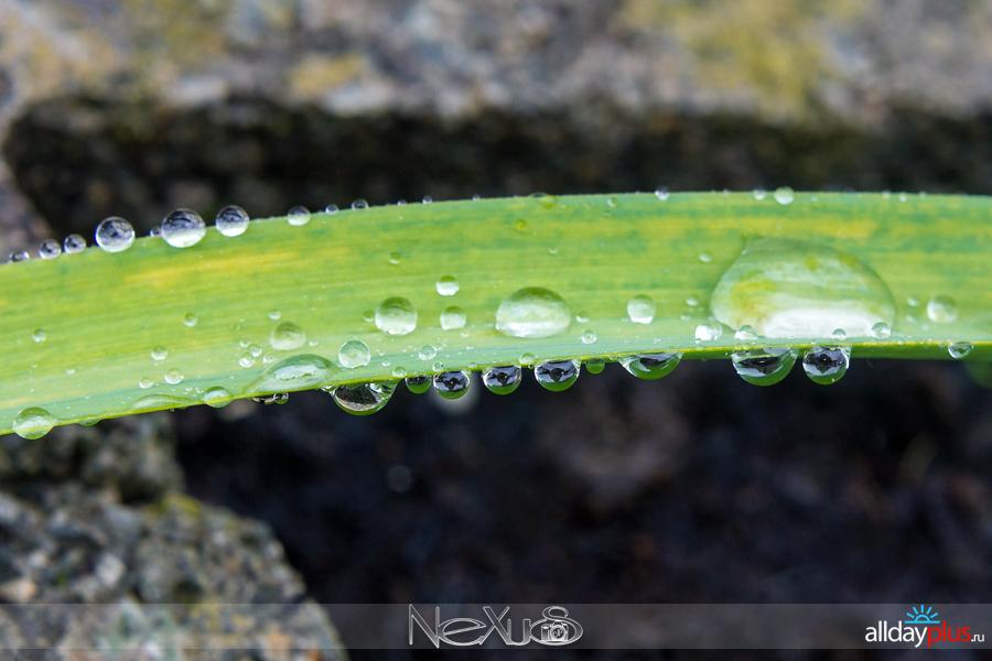 У природы нет плохой погоды, выпуск # 17 | Очарование упавших капель.