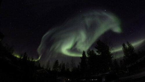 Северное сияние в Швеции, похожее на фигуру волка