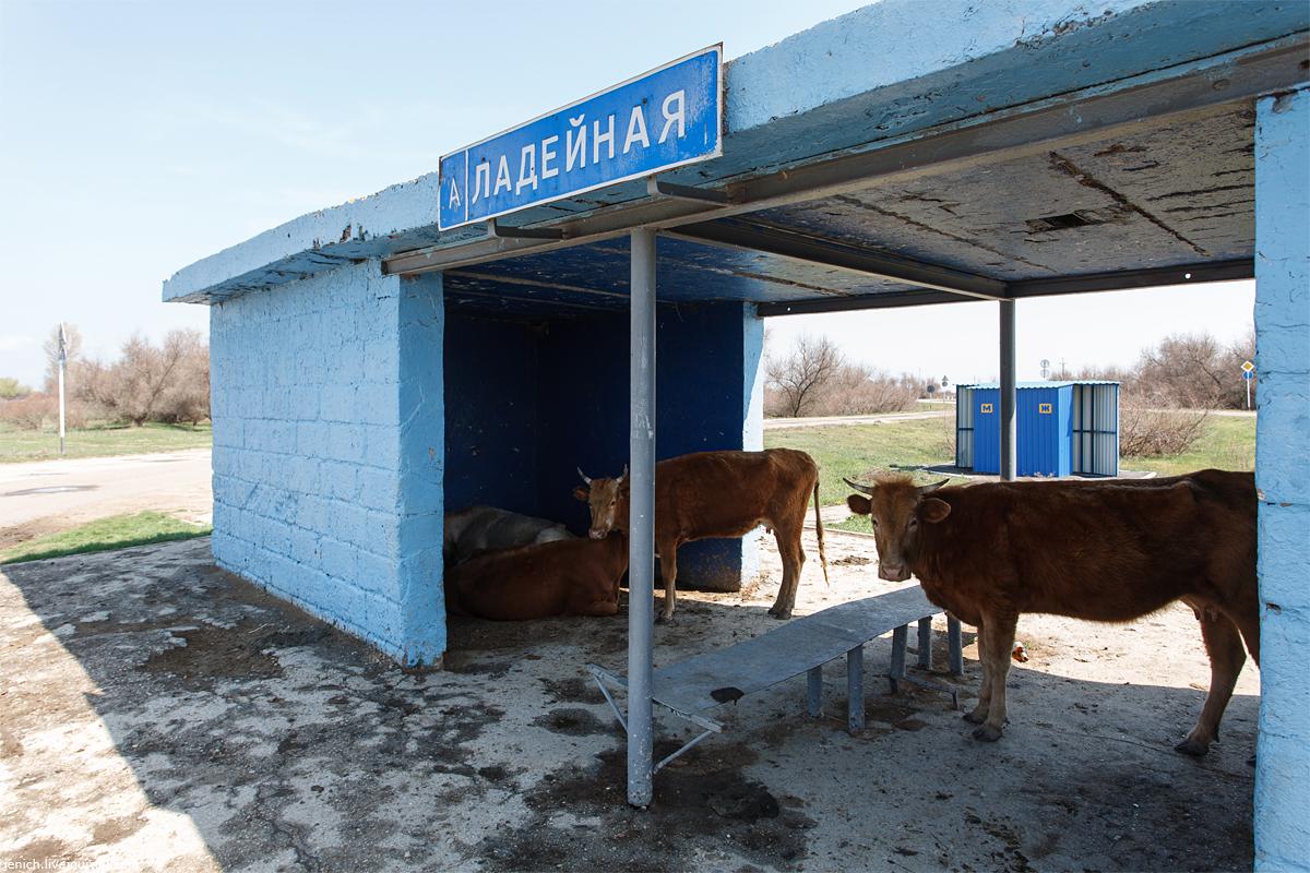 фото, фотография, Астрахань, рыбалка, паром, верблюд