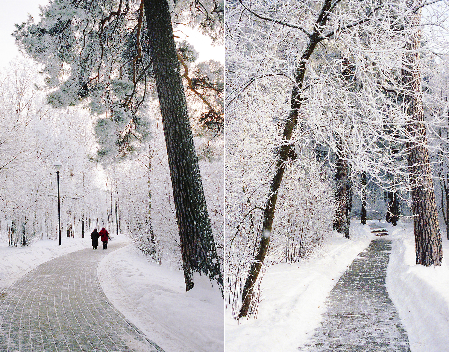 winter beauty24.jpg