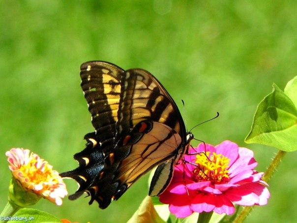 Необычайная подборка фото бабочек