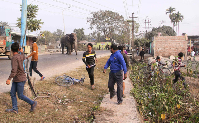 A wild elephant that strayed into the town moves through the streets as people run at Siliguri in We