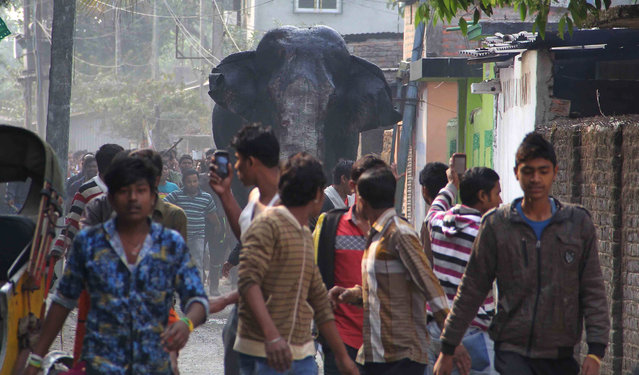 A wild elephant that strayed into the town moves through the streets as people follow at Siliguri in
