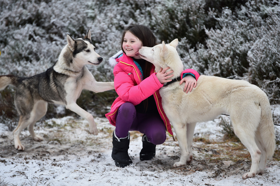 Emily Squire joins sledders and their huskies as they practice at a forest course ahead of the Aviem