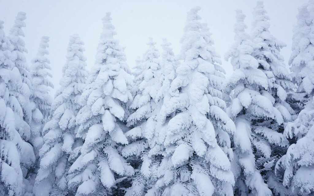 les-sneg-zima-7732.jpg