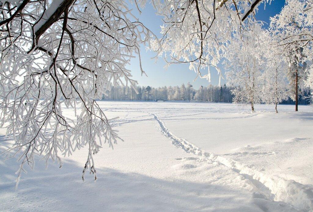 Trees-winter-ice-landscape-nature-snow_3000x2034.jpg